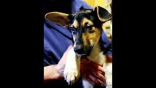 Возьмите щенка ВЕНЮ из из приюта для животных