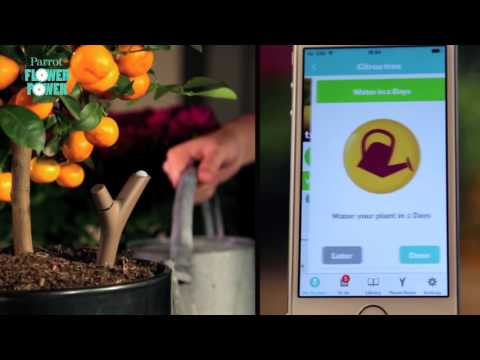 Parrot Flower Power helps you to take care of plants Buy cheap drones