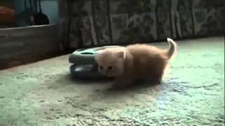 Котенок смешно топает  Смешно кошки  Funny Cat Videos