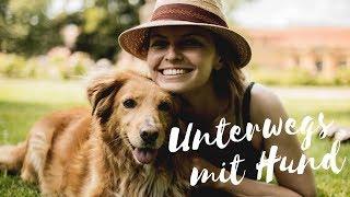 Reisen mit Hund   TIPPS FÜR EINEN URLAUB MIT HUND   Lilies Diary