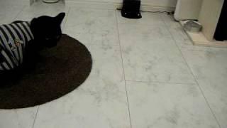 我が家に自動お掃除ロボがやってきました!トミナガさんと初対面です。 ...