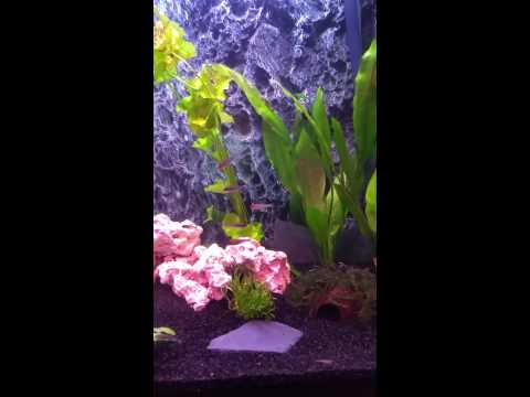 Waterhome aquarium 180 liter youtube for Waterhome aquarium