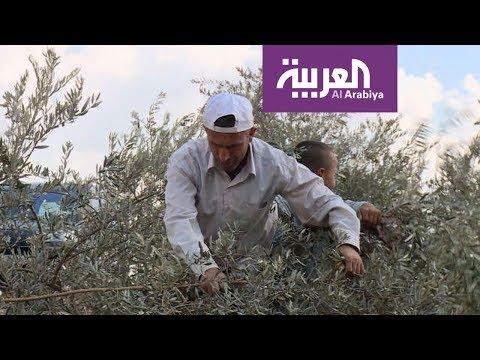 صباح العربية يرافق طقوس قطف الزيتون الفلسطيني  - نشر قبل 57 دقيقة