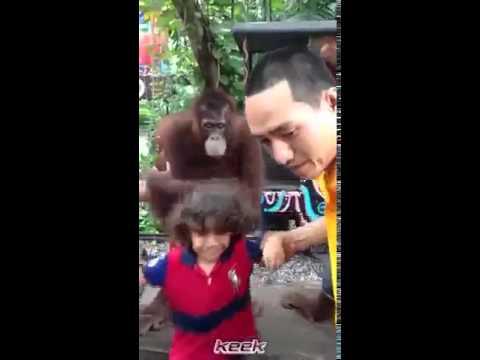 Фото с обезьянами