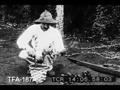Treasure of the Tropics (1920s)