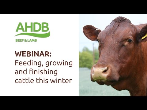 WEBINAR: Growing and finishing cattle this winter
