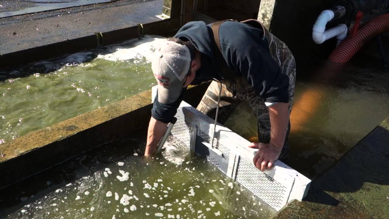 Wisconsin hatchery trades bucket brigade for mechanical for Wisconsin fish farms