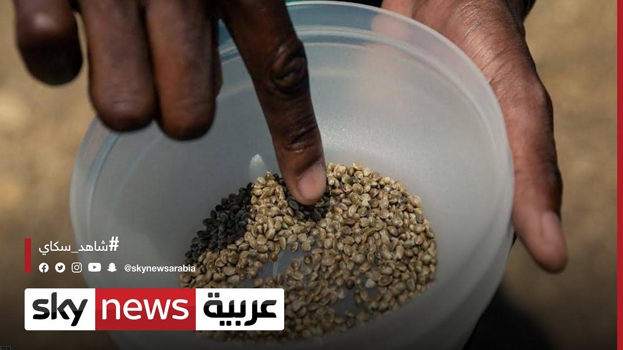 أزمة الغذاء..الأمم المتحدة قلقة من خطر عدم توفر الغذاء الصحي  - نشر قبل 6 ساعة