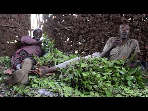 Mascando Kat En Harar (Etiopía)
