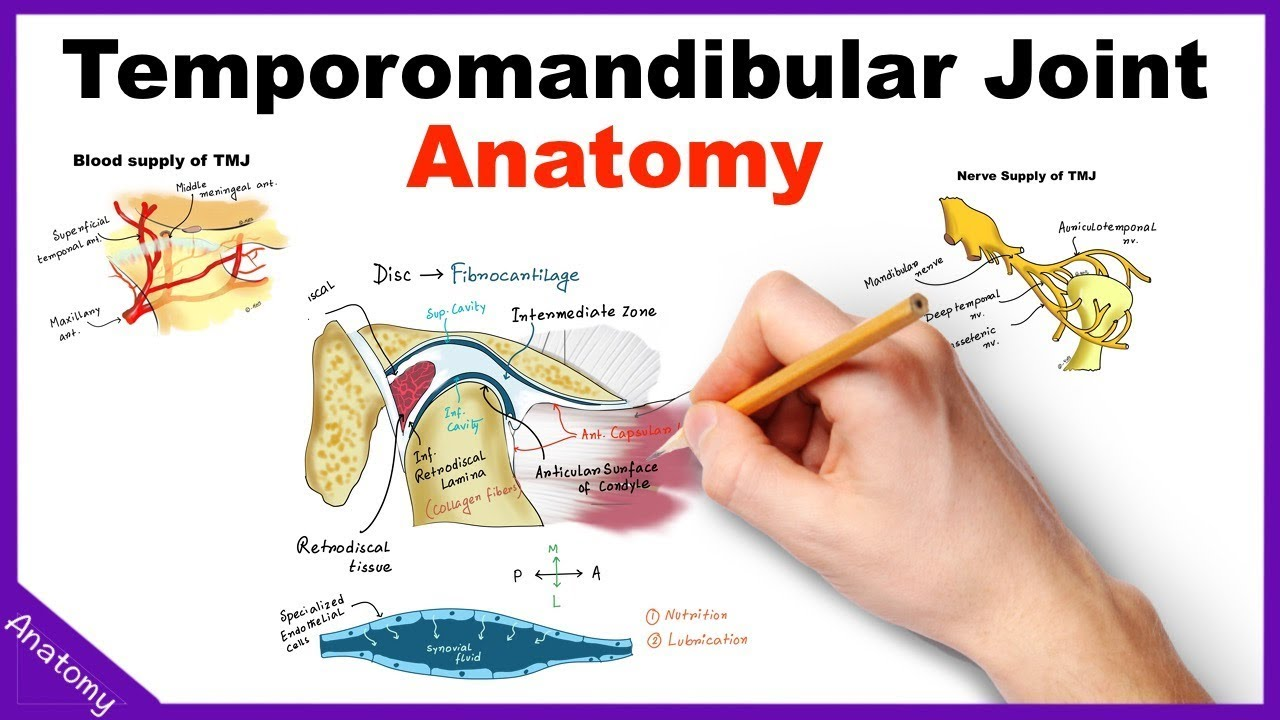Temporomandibular Joint Tmj Anatomy Animation Youtube