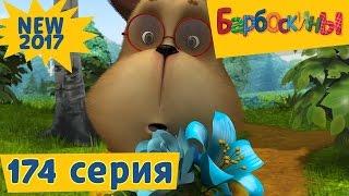 Барбоскины - 174 серия