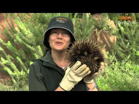 Perth Zoo TV Trailer