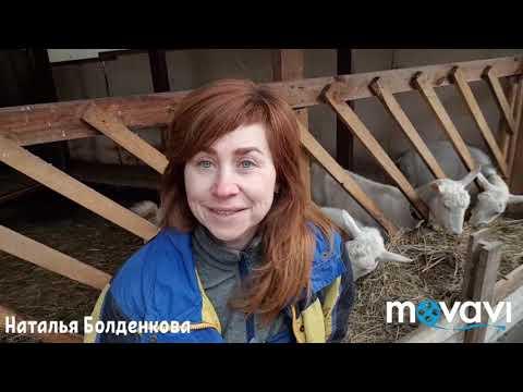 Безопасное растительное средство от внутренних паразитов у коз и не только.