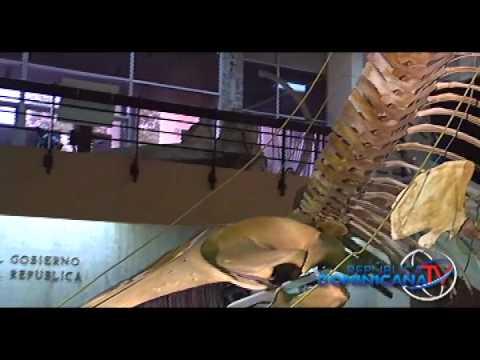 Así es República Dominicana - Museo Nacional de Historia Natural