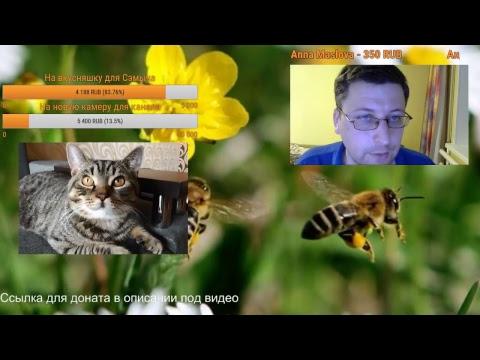 Аллергия – причины, симптомы и лечение аллергии