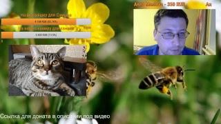 Аллергия у собак/кошки. Признаки аллергии, ее виды. Как помочь животному при аллергии?
