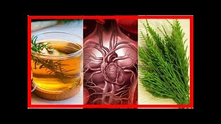 How to improve your circulation by using herbal remedies 5