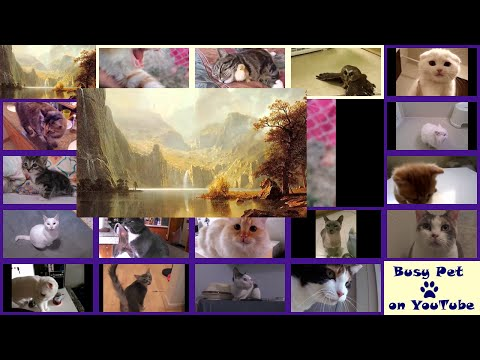Cats Meowing MORNING MOOD (very short excerpt) (A Cappella) [Classical Music]