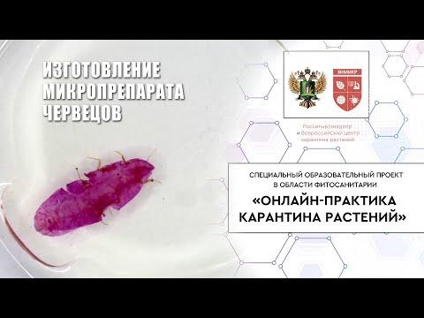 Отфильмтрованые От Вирусов Порпо Видео