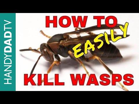 How to Kill Wasps the Easy Way - YouTube