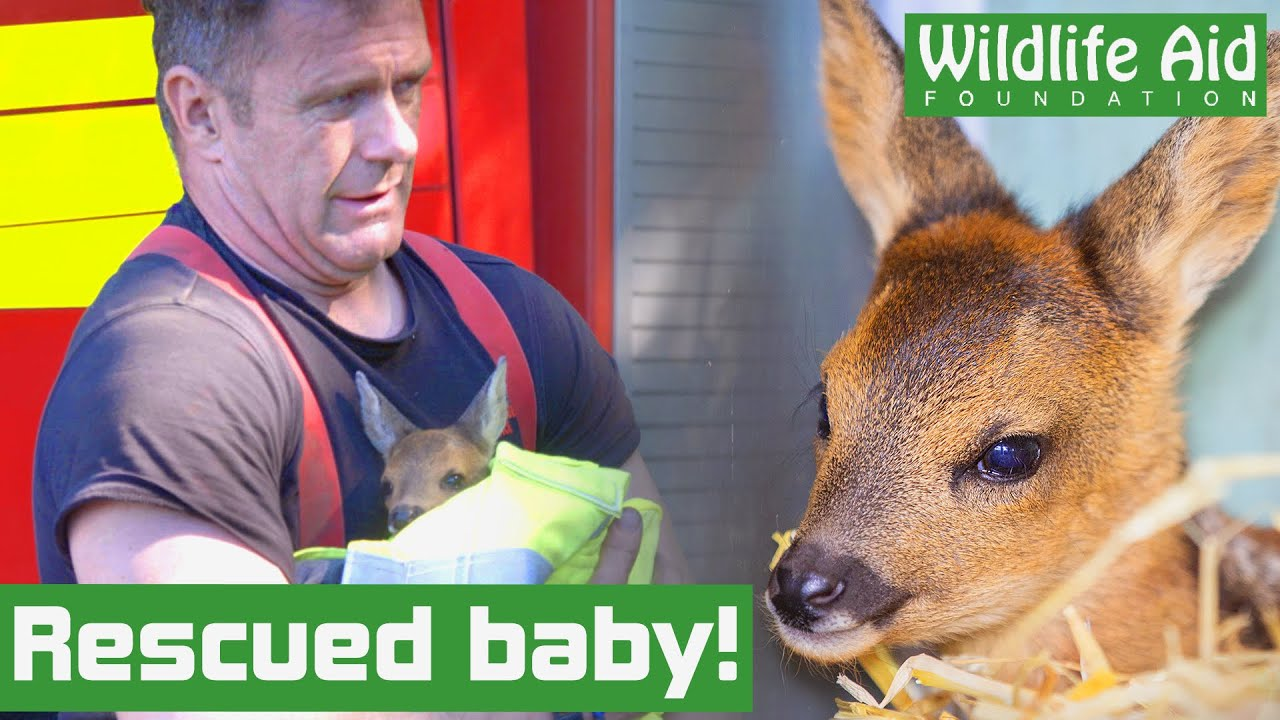 Hero firefighters rescue baby deer from blazing bush fire!