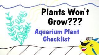 Aquarium Plants Won't Grow? Plant Growth Checklist