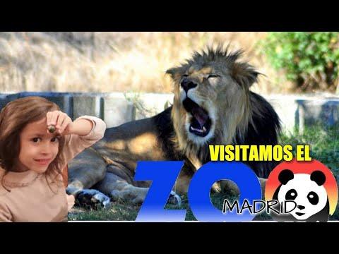 ZOO DE MADRID VLOG. VISITA AL ZOO DE MADRID. ENTRAMOS EN JAULAS DE ANIMALES.