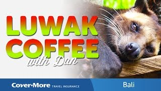 Luwak Coffee | Cover-More Travel Insurance