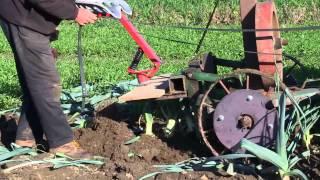 Horse Drawn Vegetable Root Lifter - Harvesting Leeks
