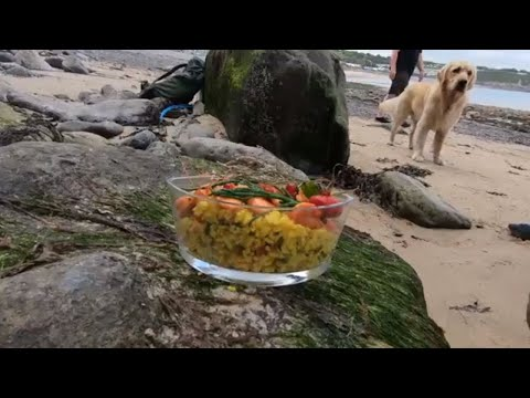 A Family Day Out ,Foraging and Cooking on the Beach with Craig Evans
