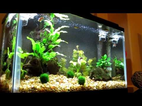 Aquarium With Live Plants