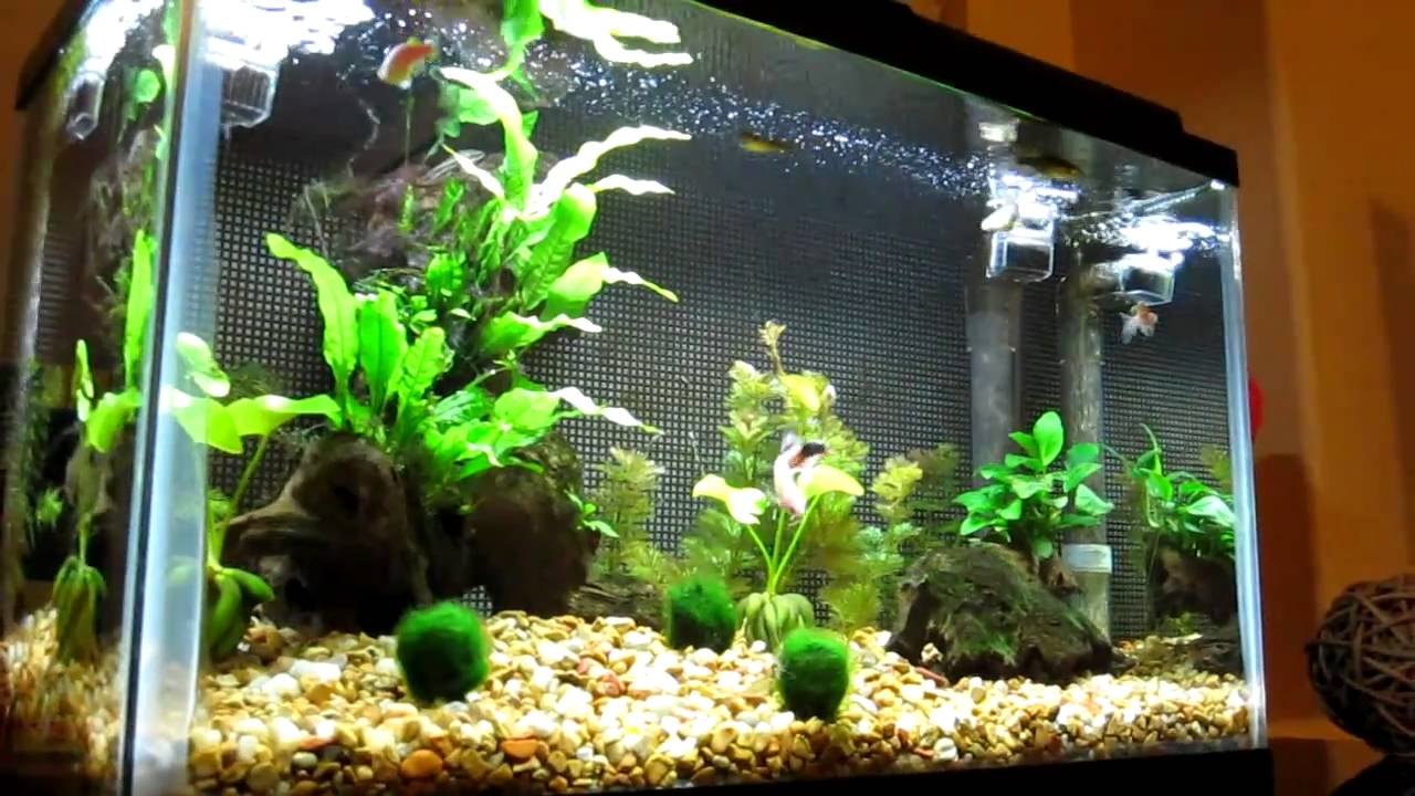 10 gallon Freshwater Aquarium with Live Plants - YouTube 10 Gallon Home Aquariums