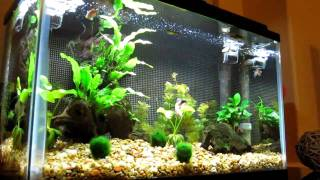 10 Gallon Freshwater Aquarium With Live Plants