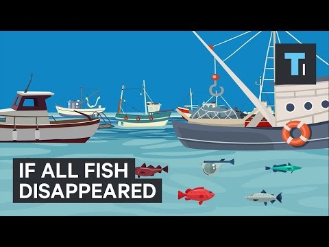 What would happen if all the fish disappeared?