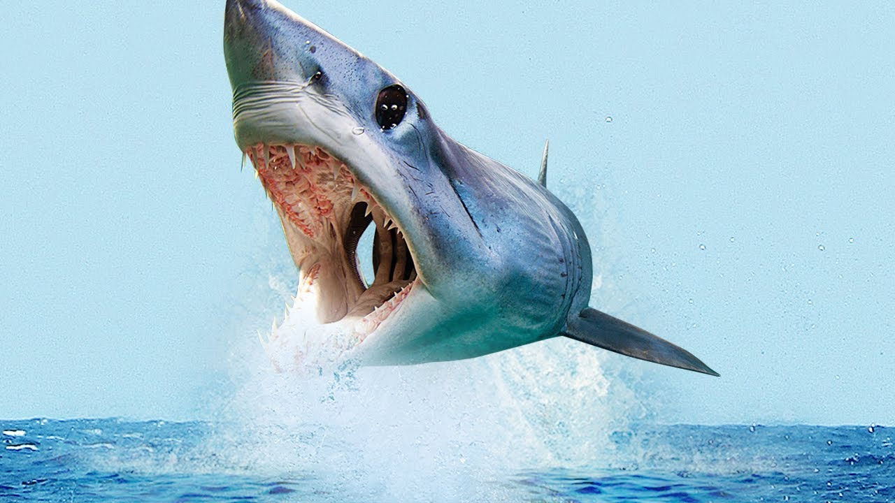 CRAZIEST Facts About The MAKO Shark!