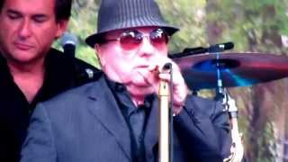 Sir. Van Morrison - 70th Birthday concert, Cyprus Avenue.  Belfast 31st August 2015