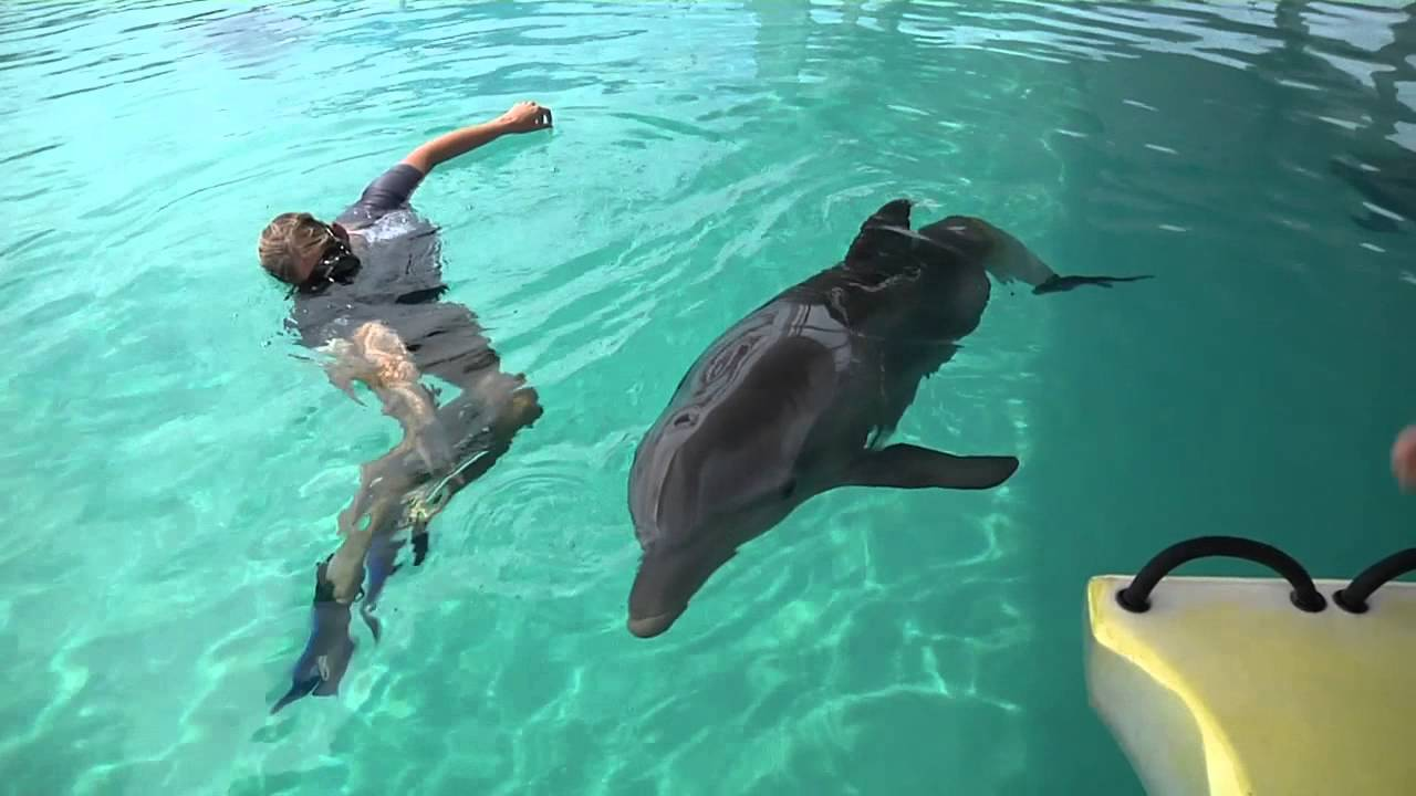 Winter the Dolphin Tests Out Her New Tail! - YouTube