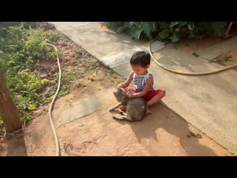 Cat play by Baby Shagun Patel