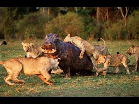National Geographic Documentary - Fighting to Survive Wild Nature - Wildlife Animal