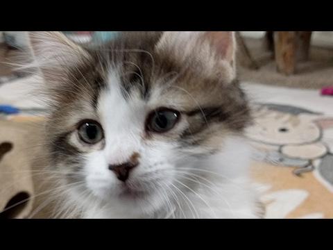 Kitten Close Up 2017-05-04