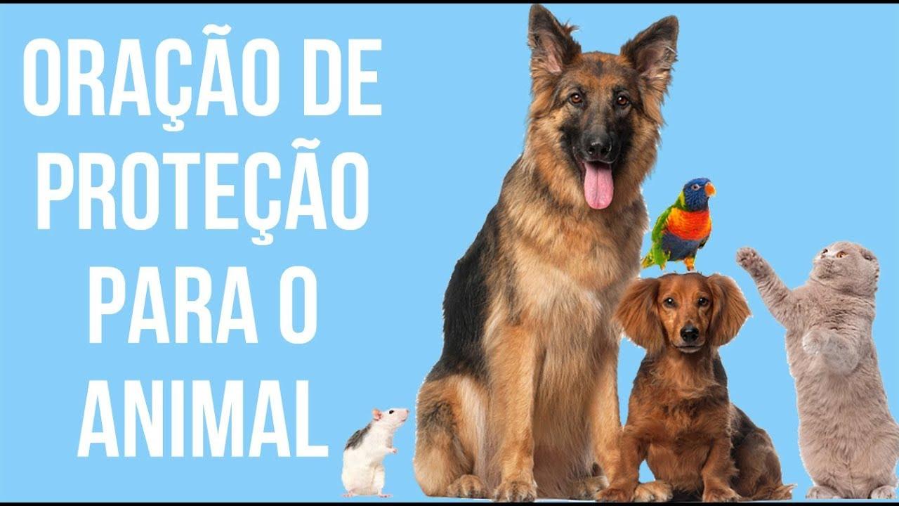 ORAÇÃO DE PROTEÇÃO PARA O ANIMAL DE ESTIMAÇÃO