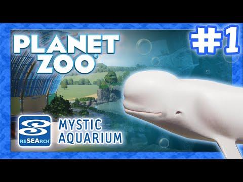 Belugas that Dive! - Mystic Aquarium Ep. 1 |