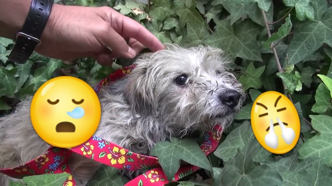 Als dieser obdachlose Hund gerettet wird passiert etwas ...