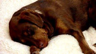 Blinder Hund verließ nie sein Bett, dann holt ihn ein ungewöhnlicher Freund zurück ins Leben!