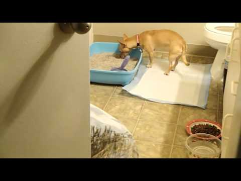 HOW TO POTTY TRAIN HOUSE YOUR PUPPY DOG LITTER BOX