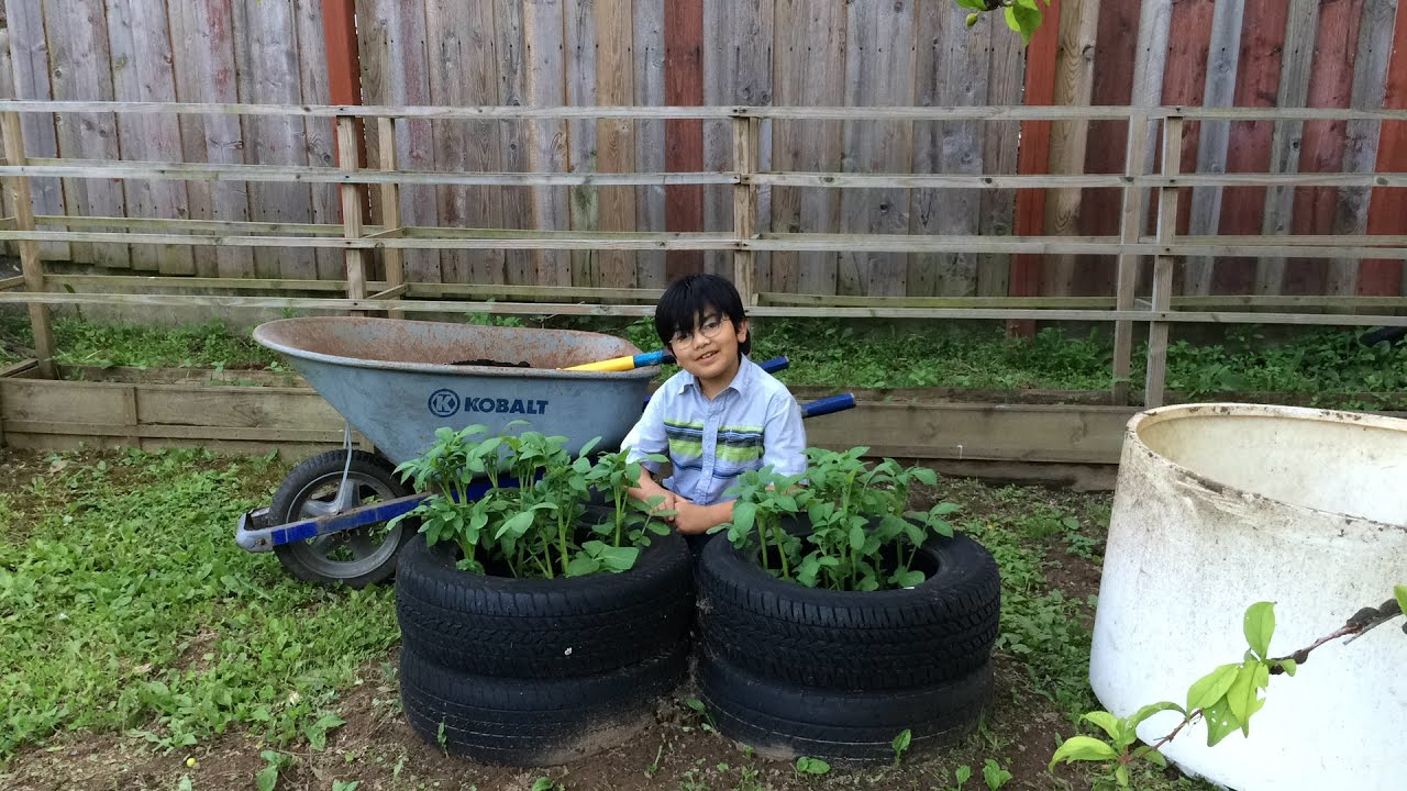 Planting potatoes in tires backyard organic gardening for How to use old tires in a garden
