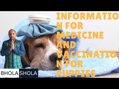 Pet Care - Information for Medicine and vaccination for puppies - Bhola Sholaa