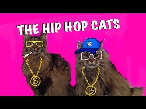 Hip Hop Cats Straight Outta Cat Town Youtube