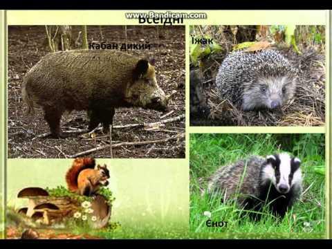 Зона мішаних лісів України (Полісся)