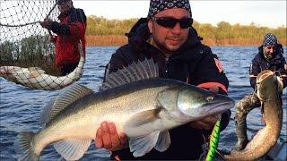 РЫБАЛКА С ДИВЕРОМ - БЕЗ ЛИШНИХ СЛОВ. апрель 2017 - ЛОВЛЯ СУДАКА - ловля трофейной рыбы. #река Ахтуба